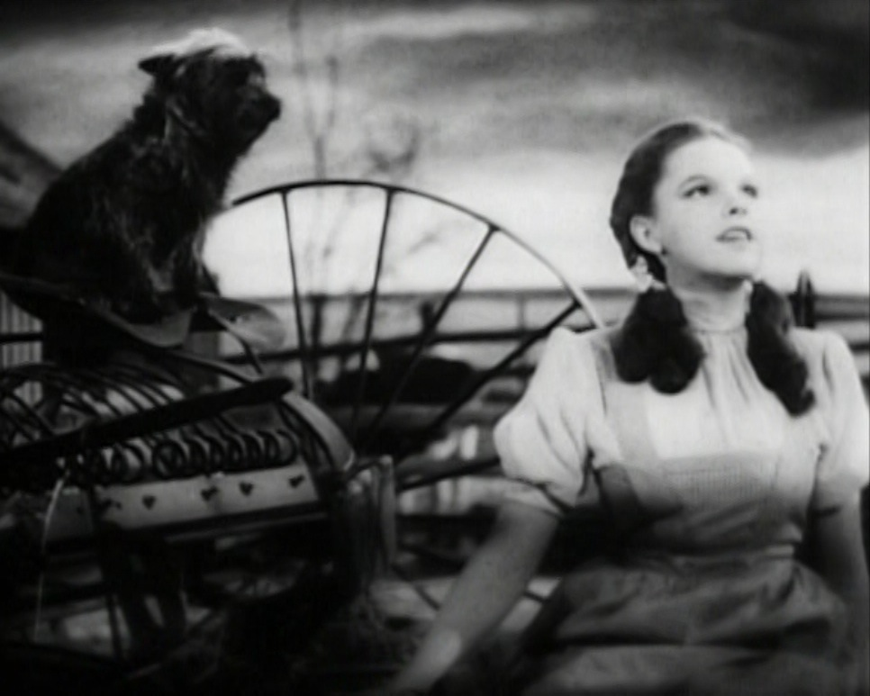 Judy Garland singing Somewhere Over the Rainbow in the classic musical, The Wizard of Oz, as Toto looks on