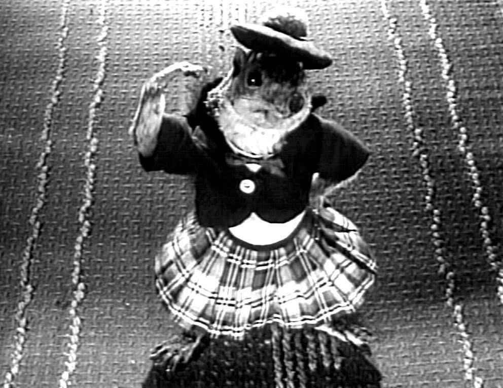 Rupert the dancing squirrel